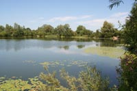 Ham Pool - South Cerney Angling Club